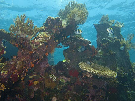 Japanese Wreck - Scuba diving holidays for beginners in Bali