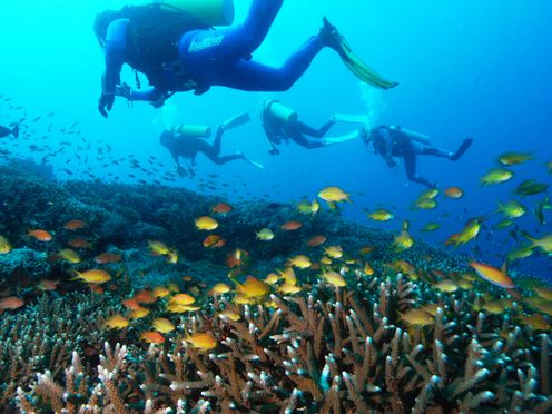 Why planning a dive vacation in Bali for beginner?