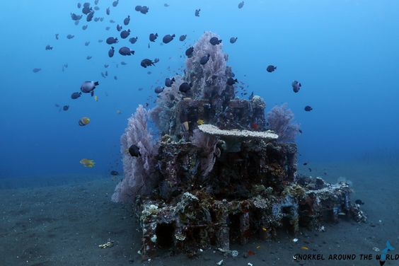 What Can You Do in Amed Diving?