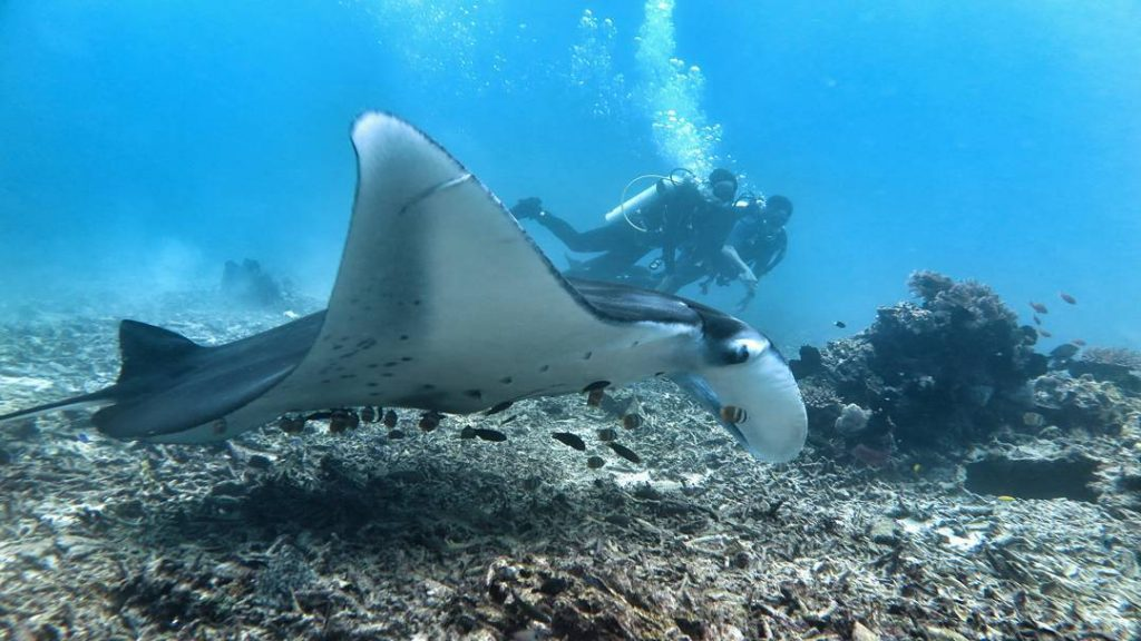 Komodo Sailing Trip: Exploring the Manta Point