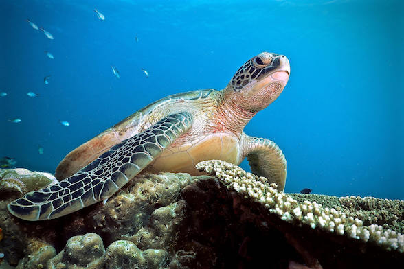 komodo snorkeling