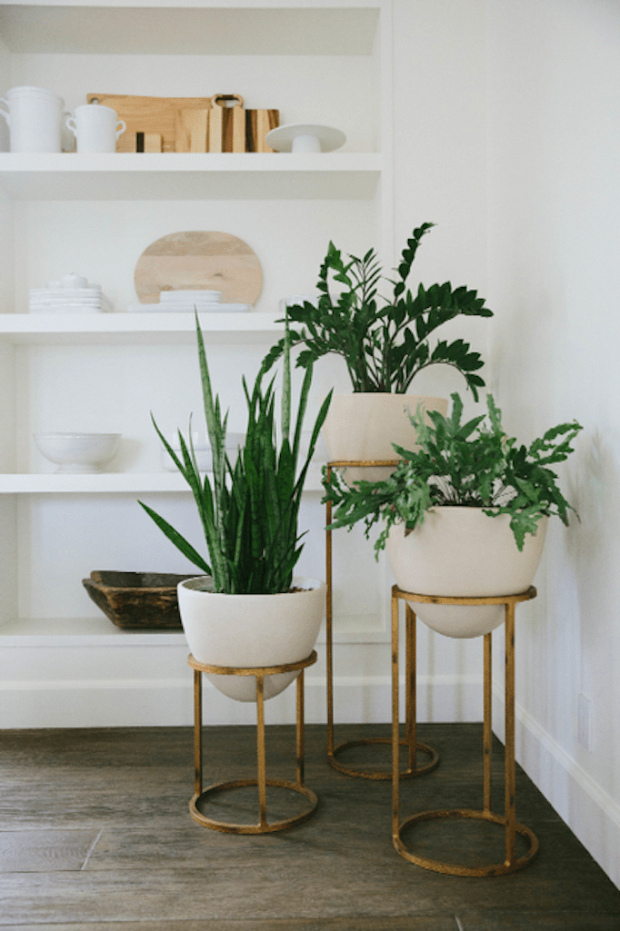 Choosing Houseplants When Going to Home Decor Store