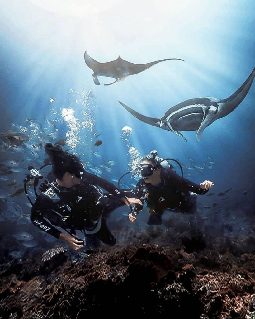 Best Dive Sites in Bali to See Endangered Marine Animals